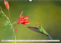 Costa Rica - Farben des Regenwaldes (Wandkalender 2019 DIN A3 quer) - Produktdetailbild 12