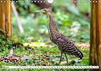 Costa Rica - Farben des Regenwaldes (Wandkalender 2019 DIN A4 quer) - Produktdetailbild 5