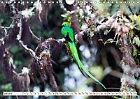 Costa Rica - Farben des Regenwaldes (Wandkalender 2019 DIN A4 quer) - Produktdetailbild 7