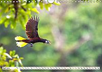 Costa Rica - Farben des Regenwaldes (Wandkalender 2019 DIN A4 quer) - Produktdetailbild 4