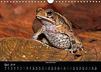 Costa Rica - Faszination Frösche (Wandkalender 2019 DIN A4 quer) - Produktdetailbild 4