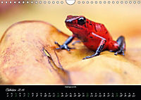 Costa Rica - Faszination Frösche (Wandkalender 2019 DIN A4 quer) - Produktdetailbild 10