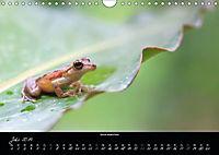 Costa Rica - Faszination Frösche (Wandkalender 2019 DIN A4 quer) - Produktdetailbild 7