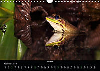 Costa Rica - Faszination Frösche (Wandkalender 2019 DIN A4 quer) - Produktdetailbild 2