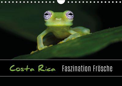 Costa Rica - Faszination Frösche (Wandkalender 2019 DIN A4 quer), Kevin Eßer