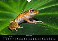 Costa Rica - Faszination Frösche (Wandkalender 2019 DIN A4 quer) - Produktdetailbild 9