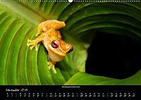 Costa Rica - Faszination Frösche (Wandkalender 2019 DIN A2 quer) - Produktdetailbild 11