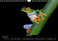 Costa Rica - Faszination Frösche (Wandkalender 2019 DIN A4 quer) - Produktdetailbild 5