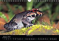 Costa Rica - Faszination Frösche (Wandkalender 2019 DIN A4 quer) - Produktdetailbild 1