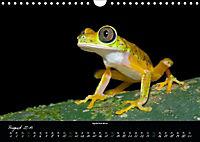 Costa Rica - Faszination Frösche (Wandkalender 2019 DIN A4 quer) - Produktdetailbild 8