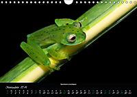 Costa Rica - Faszination Frösche (Wandkalender 2019 DIN A4 quer) - Produktdetailbild 12