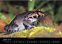 Costa Rica - Faszination Frösche (Wandkalender 2019 DIN A2 quer) - Produktdetailbild 1
