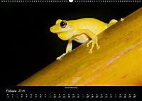 Costa Rica - Faszination Frösche (Wandkalender 2019 DIN A2 quer) - Produktdetailbild 2