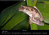 Costa Rica - Faszination Frösche (Wandkalender 2019 DIN A2 quer) - Produktdetailbild 7
