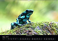 Costa Rica - Faszination Frösche (Wandkalender 2019 DIN A2 quer) - Produktdetailbild 3