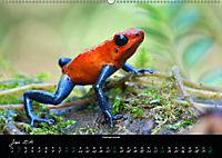 Costa Rica - Faszination Frösche (Wandkalender 2019 DIN A2 quer) - Produktdetailbild 6