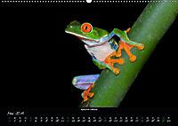 Costa Rica - Faszination Frösche (Wandkalender 2019 DIN A2 quer) - Produktdetailbild 5