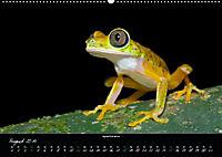 Costa Rica - Faszination Frösche (Wandkalender 2019 DIN A2 quer) - Produktdetailbild 8