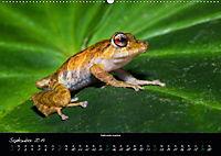 Costa Rica - Faszination Frösche (Wandkalender 2019 DIN A2 quer) - Produktdetailbild 9