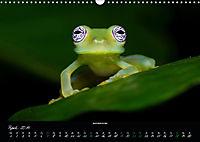 Costa Rica - Faszination Frösche (Wandkalender 2019 DIN A3 quer) - Produktdetailbild 4
