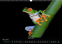 Costa Rica - Faszination Frösche (Wandkalender 2019 DIN A3 quer) - Produktdetailbild 5