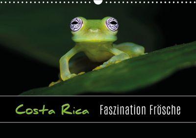 Costa Rica - Faszination Frösche (Wandkalender 2019 DIN A3 quer), Kevin Eßer