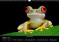Costa Rica - Faszination Frösche (Wandkalender 2019 DIN A3 quer) - Produktdetailbild 10