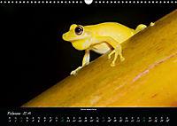 Costa Rica - Faszination Frösche (Wandkalender 2019 DIN A3 quer) - Produktdetailbild 2