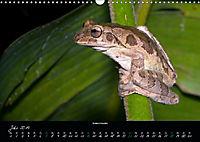 Costa Rica - Faszination Frösche (Wandkalender 2019 DIN A3 quer) - Produktdetailbild 7