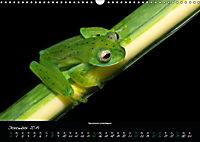 Costa Rica - Faszination Frösche (Wandkalender 2019 DIN A3 quer) - Produktdetailbild 12