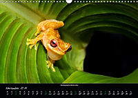 Costa Rica - Faszination Frösche (Wandkalender 2019 DIN A3 quer) - Produktdetailbild 11