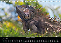 Costa Rica - Reptilien und Amphibien (Tischkalender 2019 DIN A5 quer) - Produktdetailbild 5