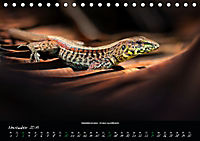 Costa Rica - Reptilien und Amphibien (Tischkalender 2019 DIN A5 quer) - Produktdetailbild 11