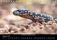 Costa Rica - Reptilien und Amphibien (Tischkalender 2019 DIN A5 quer) - Produktdetailbild 2