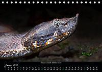 Costa Rica - Reptilien und Amphibien (Tischkalender 2019 DIN A5 quer) - Produktdetailbild 1