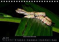 Costa Rica - Reptilien und Amphibien (Tischkalender 2019 DIN A5 quer) - Produktdetailbild 7