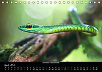 Costa Rica - Reptilien und Amphibien (Tischkalender 2019 DIN A5 quer) - Produktdetailbild 4