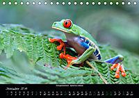 Costa Rica - Reptilien und Amphibien (Tischkalender 2019 DIN A5 quer) - Produktdetailbild 12