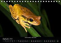 Costa Rica - Reptilien und Amphibien (Tischkalender 2019 DIN A5 quer) - Produktdetailbild 9