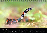 Costa Rica - Reptilien und Amphibien (Tischkalender 2019 DIN A5 quer) - Produktdetailbild 10