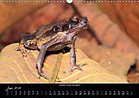Costa Rica - Reptilien und Amphibien (Wandkalender 2019 DIN A3 quer) - Produktdetailbild 6