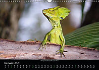 Costa Rica - Reptilien und Amphibien (Wandkalender 2019 DIN A3 quer) - Produktdetailbild 11