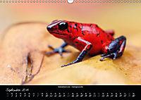 Costa Rica - Reptilien und Amphibien (Wandkalender 2019 DIN A3 quer) - Produktdetailbild 9