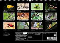 Costa Rica - Reptilien und Amphibien (Wandkalender 2019 DIN A3 quer) - Produktdetailbild 13