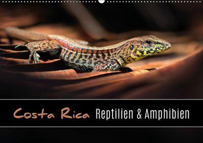 Costa Rica - Reptilien und Amphibien (Wandkalender 2019 DIN A2 quer), Kevin Esser