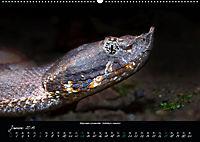 Costa Rica - Reptilien und Amphibien (Wandkalender 2019 DIN A2 quer) - Produktdetailbild 1