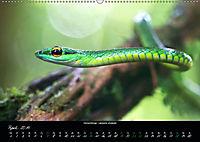 Costa Rica - Reptilien und Amphibien (Wandkalender 2019 DIN A2 quer) - Produktdetailbild 4