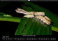 Costa Rica - Reptilien und Amphibien (Wandkalender 2019 DIN A2 quer) - Produktdetailbild 7