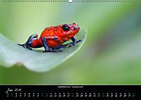 Costa Rica - Reptilien und Amphibien (Wandkalender 2019 DIN A2 quer) - Produktdetailbild 6
