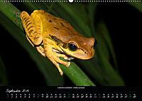 Costa Rica - Reptilien und Amphibien (Wandkalender 2019 DIN A2 quer) - Produktdetailbild 9